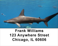 Shark Infested Waters Address Labels | LBANJ-64