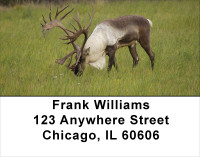 Caribou Address Labels | LBANK-24