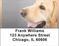 Beautiful Yellow Labs Address Labels | LBBBB-07