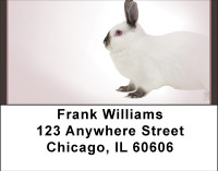 Magic Rabbit Address Labels | LBBBH-91