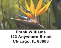 Bird Of Paradise Address Labels | LBFLO-03