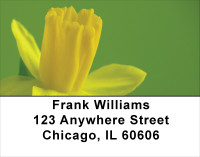 Mellow Yellow Address Labels | LBFLO-49