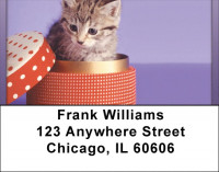 Kitten In A Box Address Labels | LBQBA-92