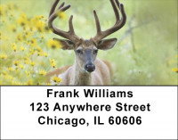 Deer Racks Address Labels | LBQBB-18