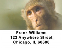 Monkey Days Address Labels | LBZANJ-44