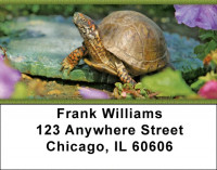 Box Turtles Address Labels | LBZANJ-83
