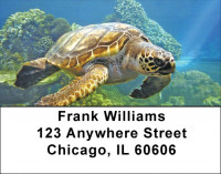 Swimming Sea Turtles Address Labels | LBZANJ-85