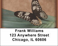 Terracotta Butterfly Address Labels | LBZANK-08