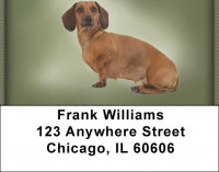 Dachshunds Address Labels | LBZDOG-15