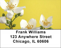 Yellow And White Florals Address Labels | LBZFLO-55