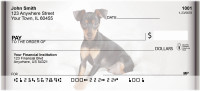 Fun Miniature Pinscher Personal Checks | ZDOG-27