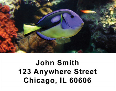 Tropical Fish Address Labels | LBANI-01