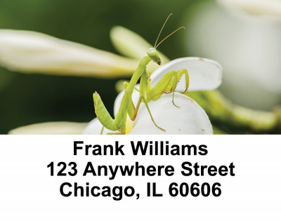Praying Mantises Address Labels | LBANI-34