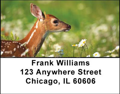Deer Fawn Address Labels | LBANI-57