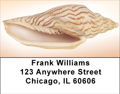 Peachy Shell Collection Address Labels | LBBBE-02