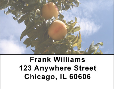 Fruit Trees Address Labels | LBBBH-80