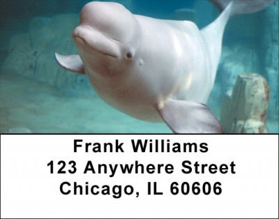 Beluga Address Labels | LBZANJ-14