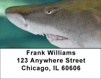 Jaws Address Labels | LBZANJ-63