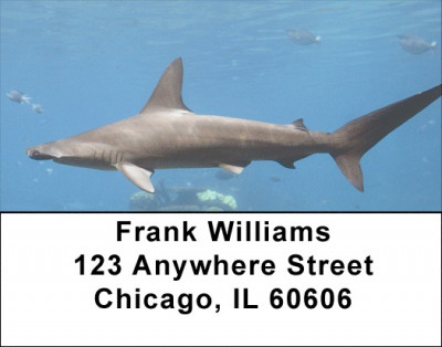 Shark Infested Waters Address Labels | LBZANJ-64