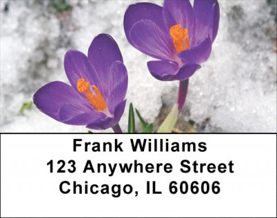 Crocus Address Labels | LBZFLO-11
