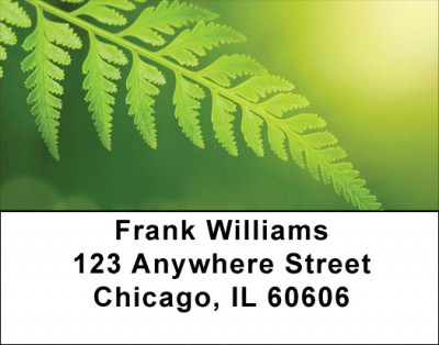 Branching Out Address Labels | LBZNAT-40