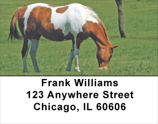 Grazing Green Pastures Horse Address Labels | LBANJ-36