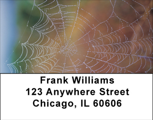 Spider Webs Address Labels | LBBBE-15