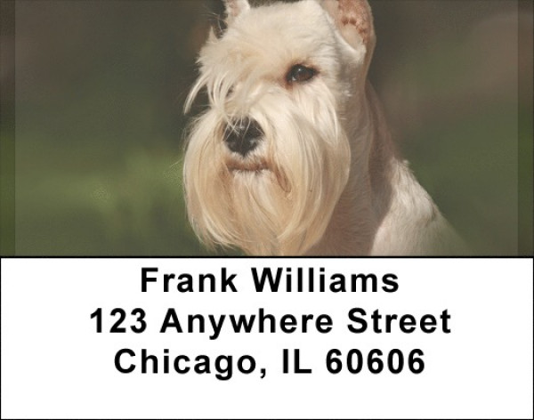 Scottish Terriers Address Labels | LBQBB-92