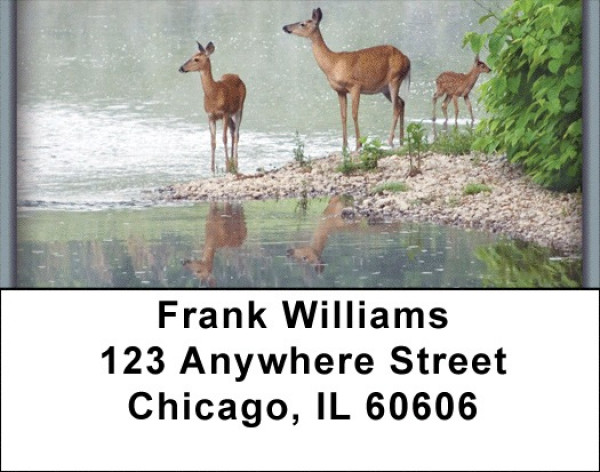 Deer Address Labels | LBZANI-55