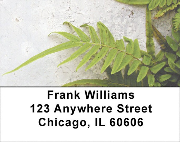 Fern On Walls Address Labels | LBZNAT-46