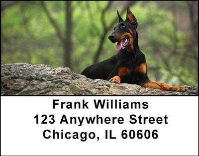Dobermans Address Labels - 1