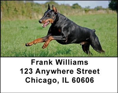 Dobermans Address Labels - 2