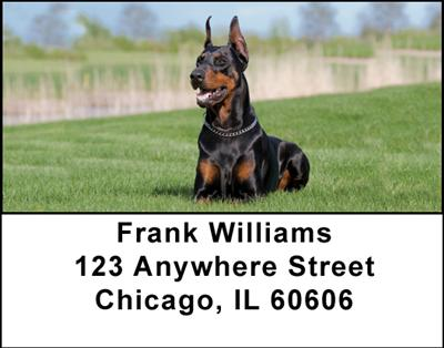 Dobermans Address Labels - 4