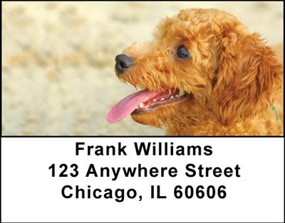 Toy Poodles Address Labels - 1