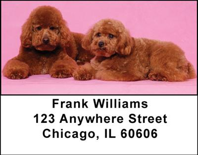 Toy Poodles Address Labels - 4