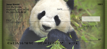 Panda Bears Personal Checks