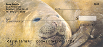 Elephant Seals and Sea Lions Personal Checks