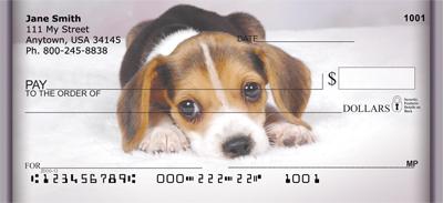 Beagle Puppies Checks