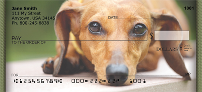 Dachshund Portraits Checks