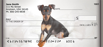 Fun Miniature Pinscher Personal Checks