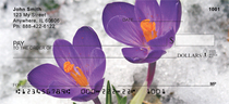 Crocus Personal Checks