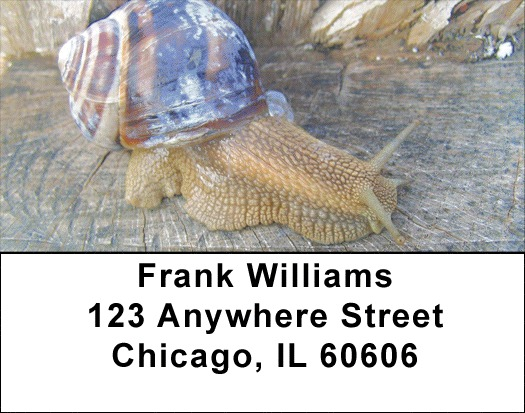 Snails On Parade Address Labels