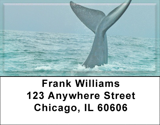 Whale Of A Tail Address Labels