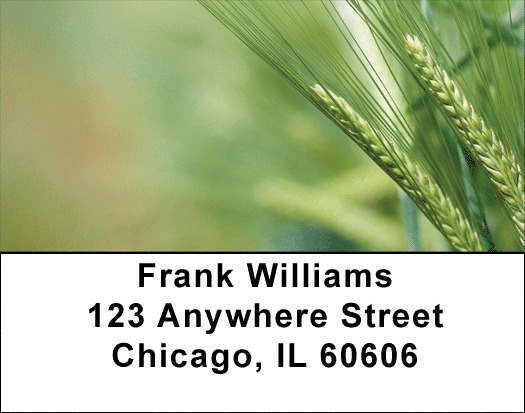The Grain Harvest Address Labels
