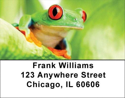It's A Froggy Frog World Address Labels - 3