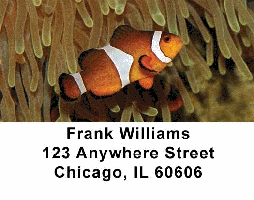 Tropical Fish Address Labels - 1