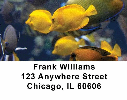 Tropical Fish Address Labels - 3