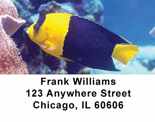 Tropical Fish Address Labels - 4