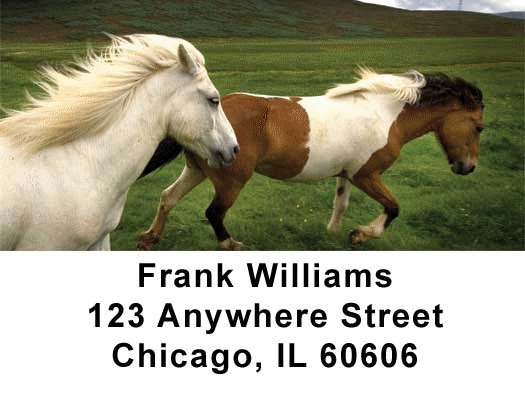 Horses Checks Address Labels - 1