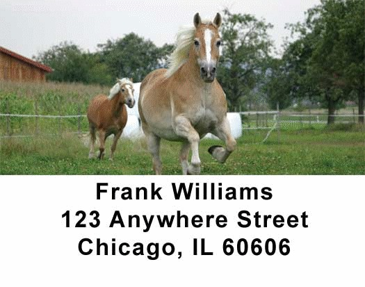 Horses Checks Address Labels - 2